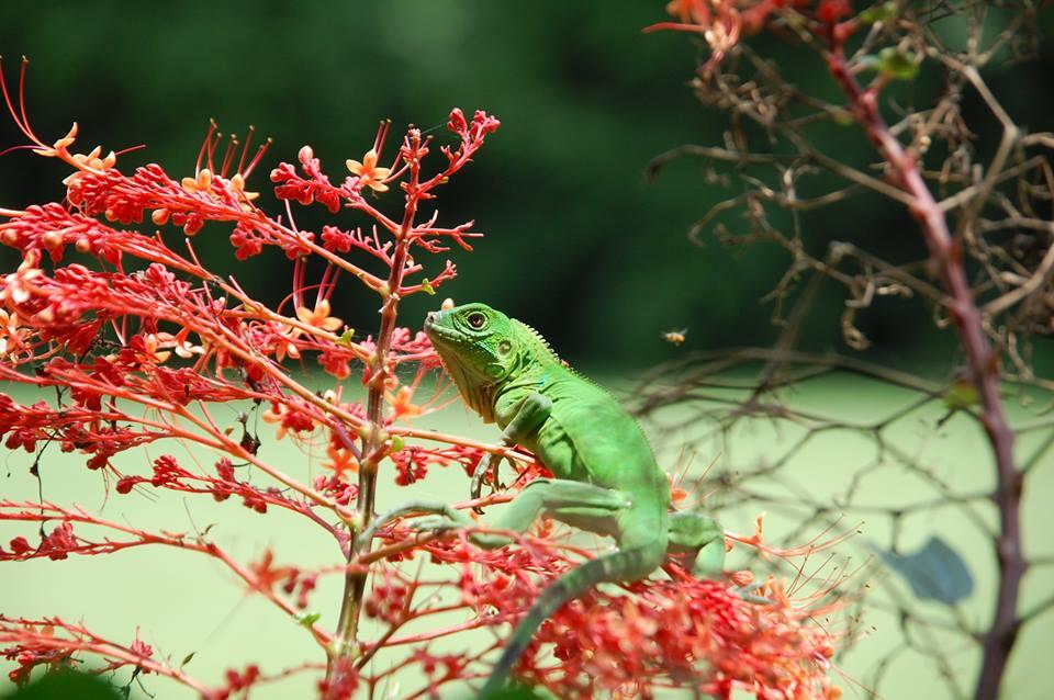 Wildlife Osa Peninsula Costa Rica Casa Bella